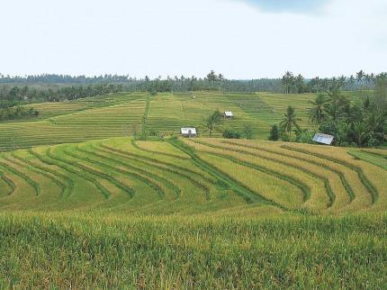 Indonésie - Poznávací zájezdy
