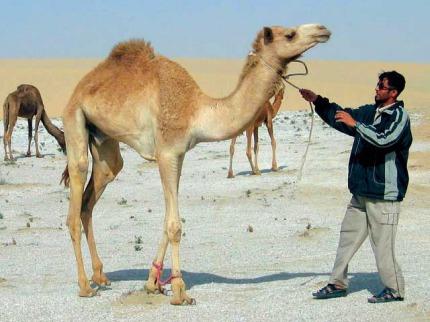 Katar - Poznávací zájezdy
