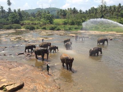 Srí Lanka - Srí Lanka - okruh+pobyt