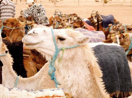 Tunisko - Poznávací zájezdy