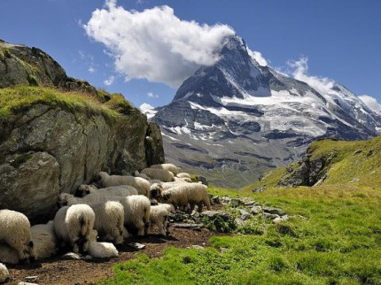 Kr�sy francouzsk�ch a �v�carsk�ch Alp