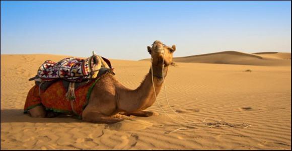 TUNISKO opět v prodeji